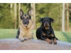 Suplementy dla psów